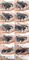 Puppies III
