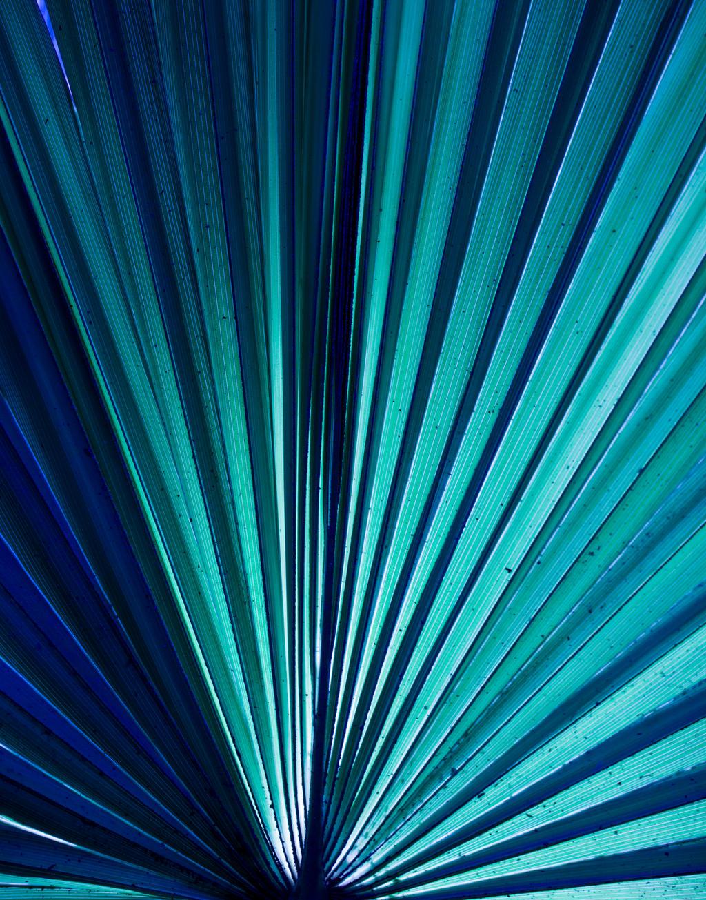 Blue by EyeOfTheKat