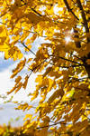 Colors of Autumn III