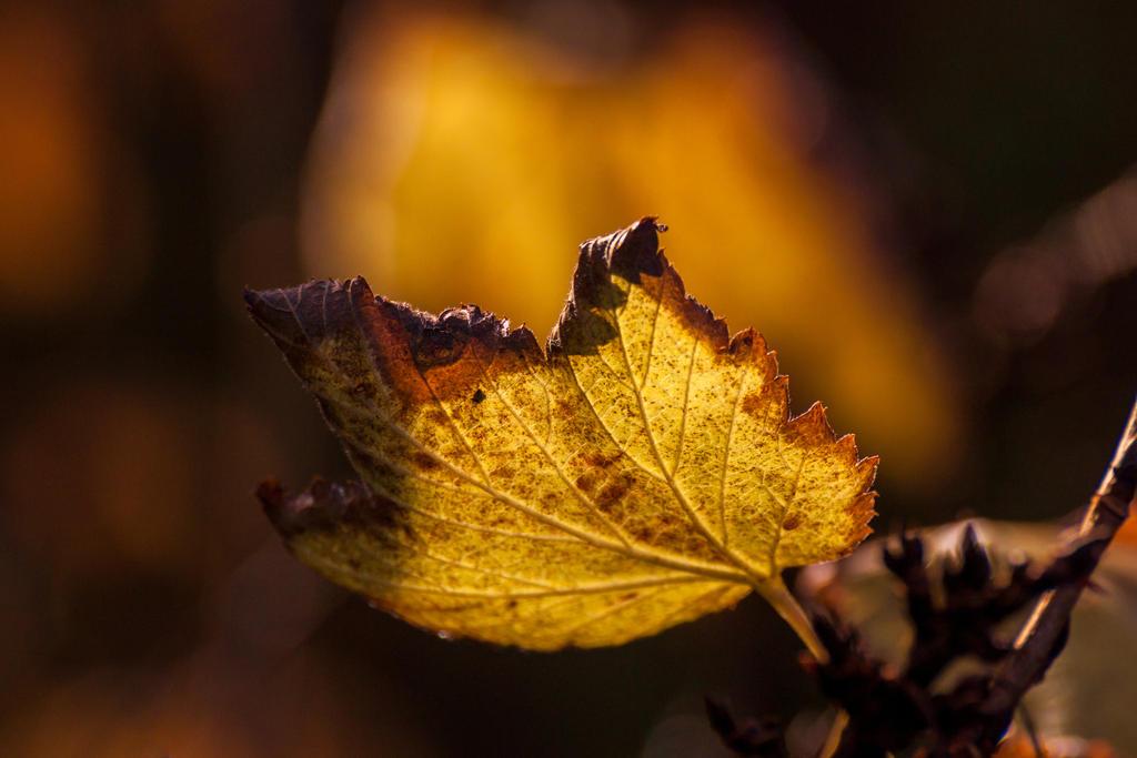 Fires of Autumn II by EyeOfTheKat