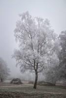 Frozen by EyeOfTheKat