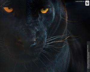Wolfsrain2377's Profile Picture