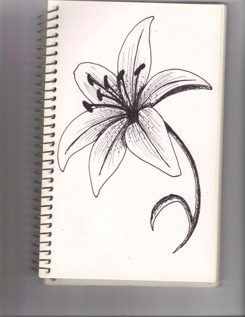 A lily flower by lyddy666 on deviantart a lily flower by lyddy666 izmirmasajfo Choice Image