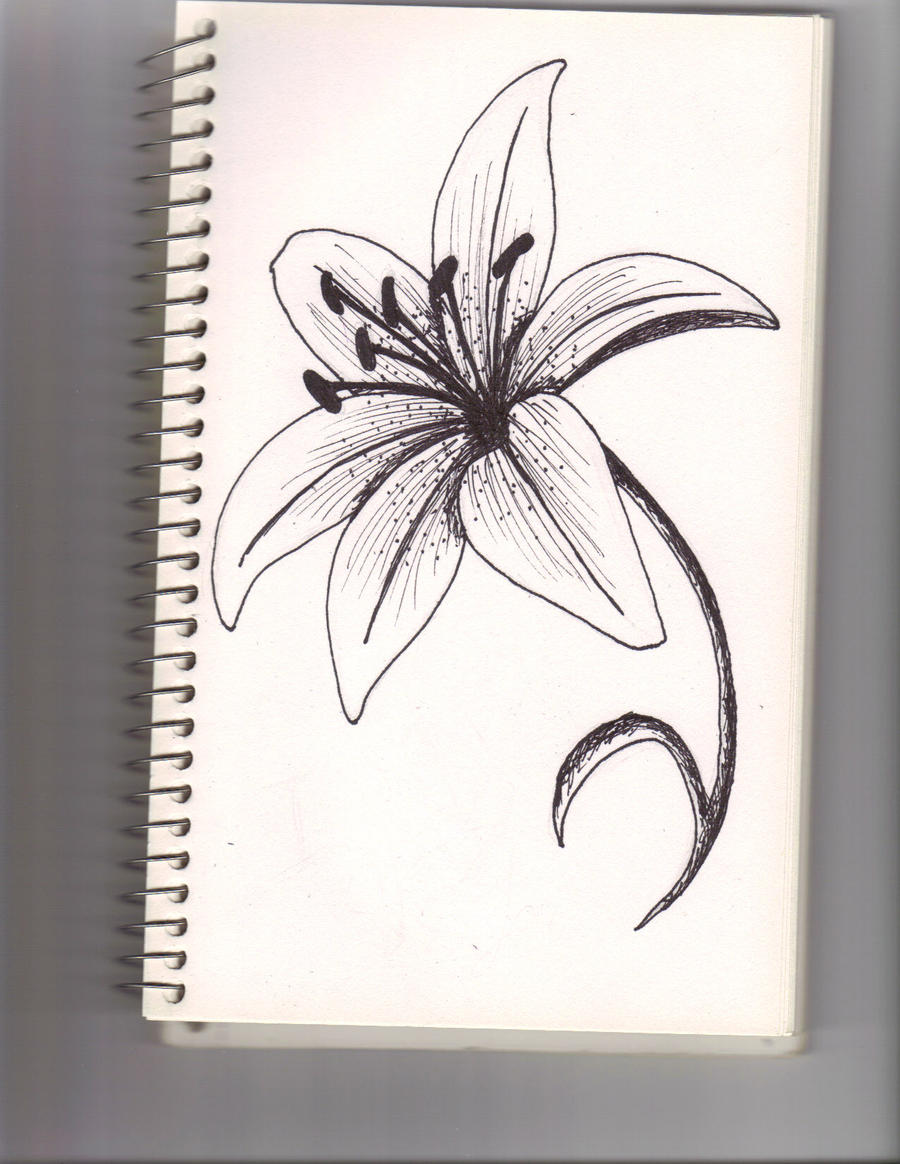 A lily flower by lyddy666 on DeviantArt