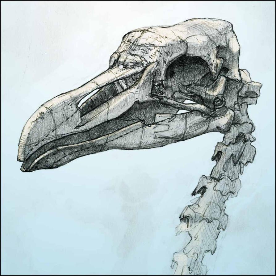 Bird skull by Nicoll on DeviantArt