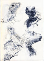 Lizard Sketches by Nicoll