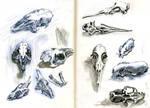 Small fluffy animal skulls by Nicoll