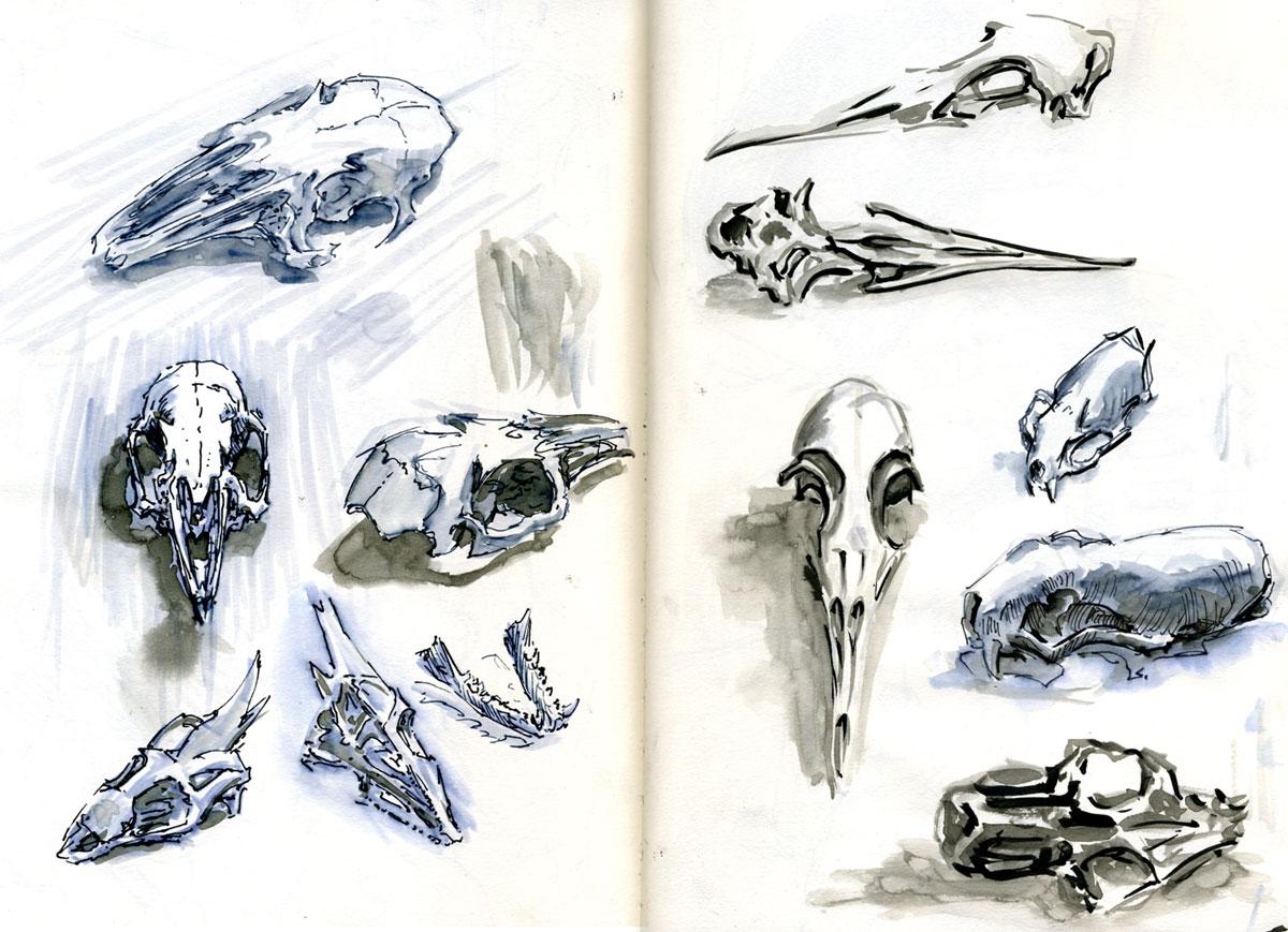 Small fluffy animal skulls by nicoll on deviantart for Small art drawings