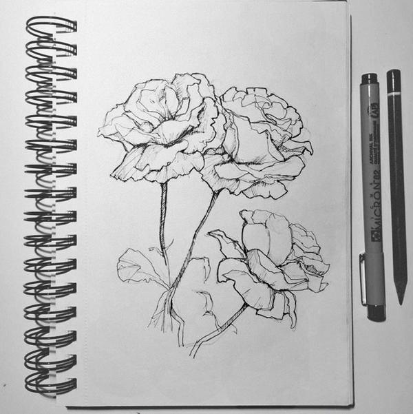 Flowers study by katiebloo