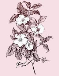 Flowers study