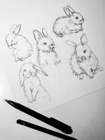 Bunnies by katiebloo