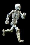 Bone-3 FREE