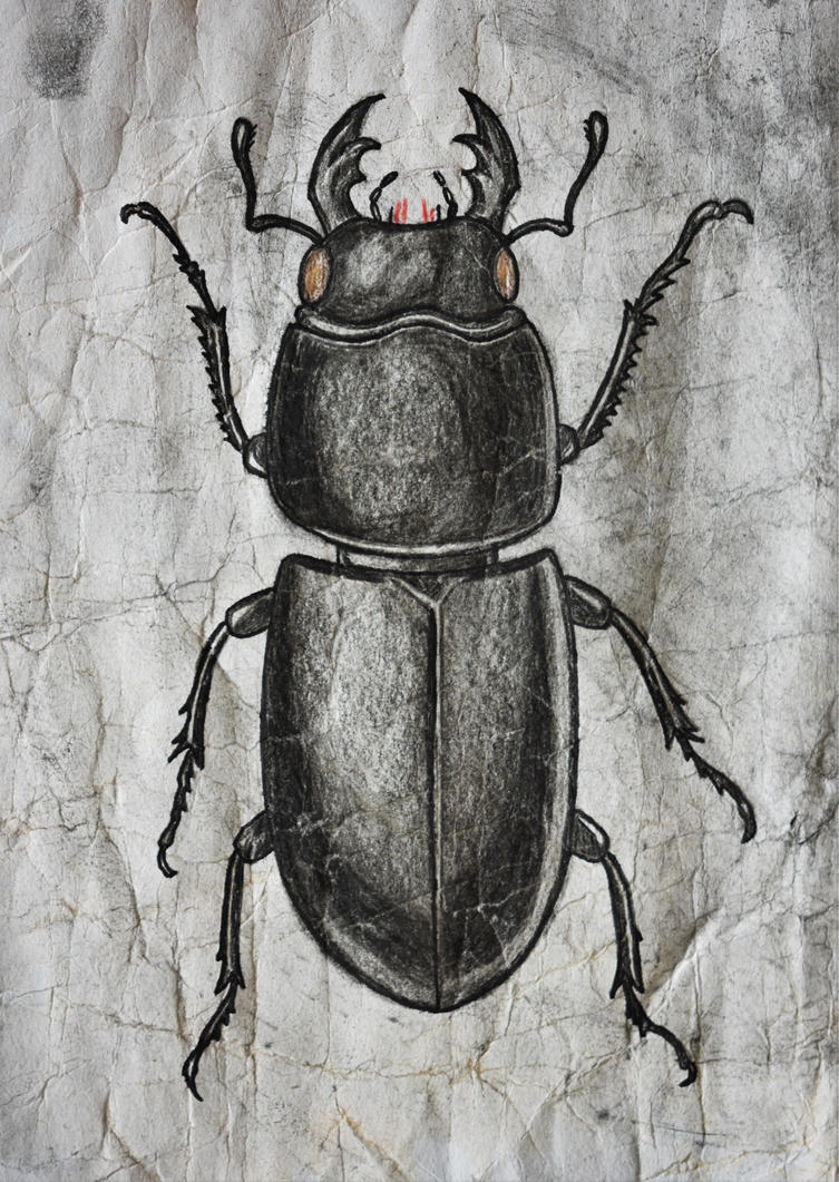 Beechbug by FrankSamuRai