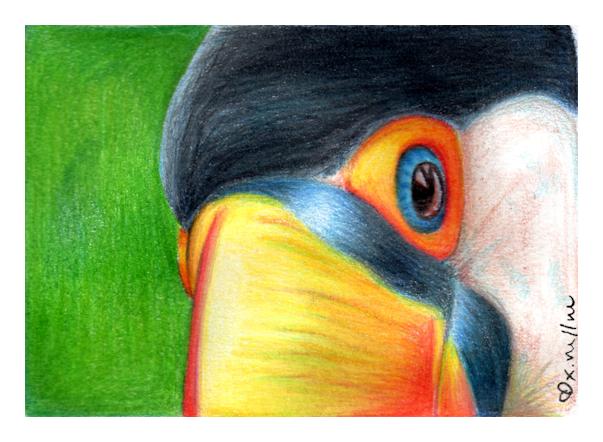 Toucan. by xMoshyMCCOY
