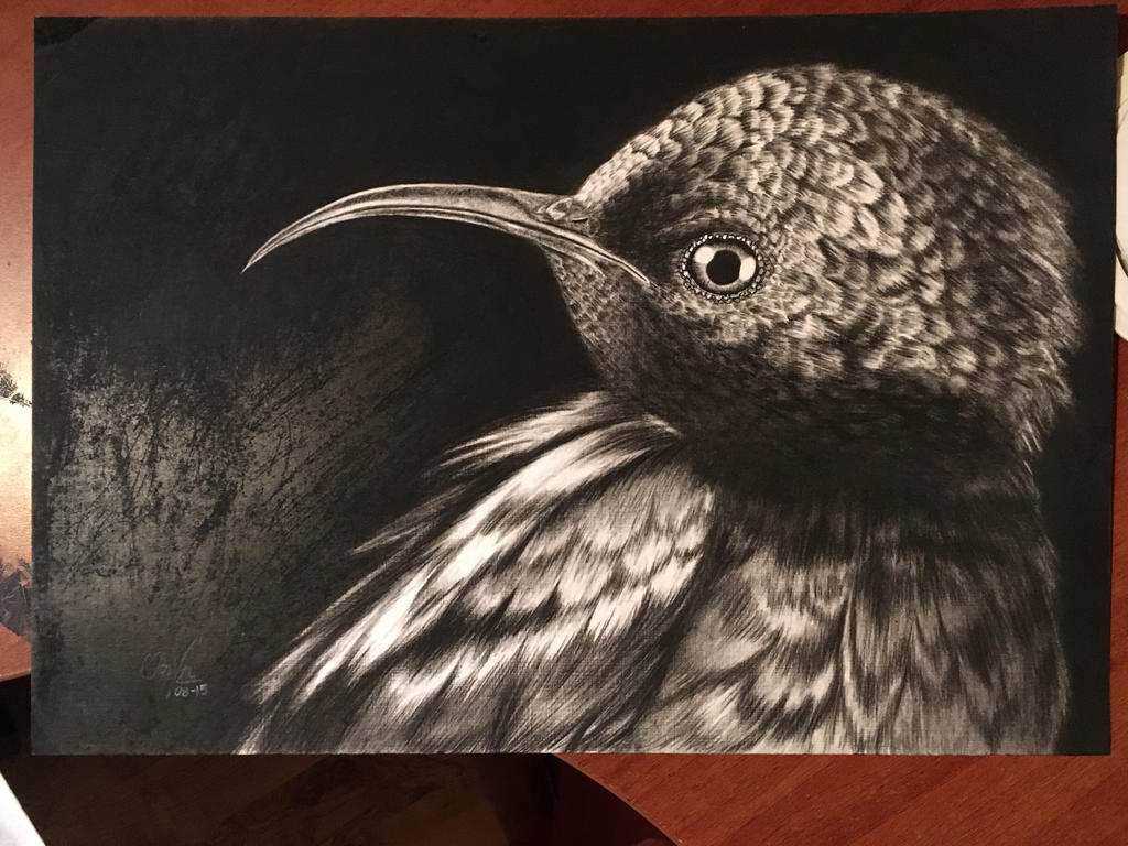 Hummingbird (Charcoal) by Oricat