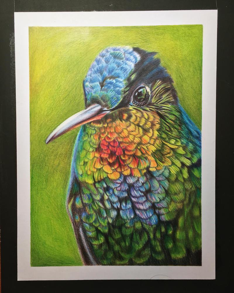 Hummingbird (Color) by Oricat