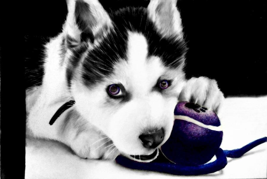 siberian husky puppy drawing cute by desiangel1 on deviantart