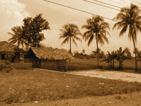 Fields past Cianjur
