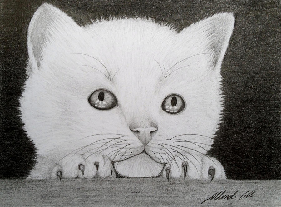 White kitten by Udvardi