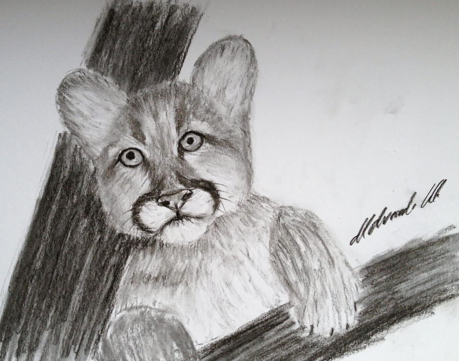 Baby cougar by Udvardi