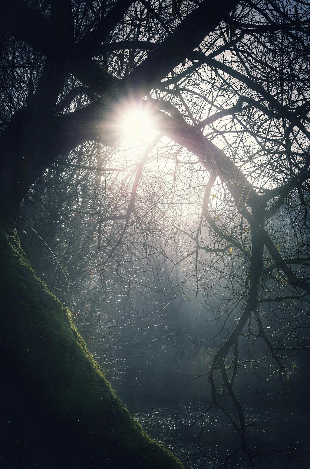 Sunshine by antivir123