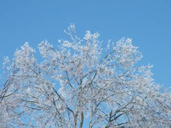 Icy Tree Top by Karella1022