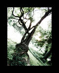 The Kaa Tree