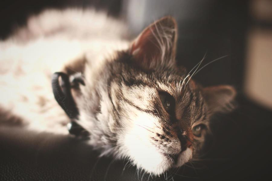 Peanut Sleepin by HolyFrap
