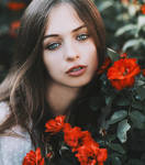 Rose beauty