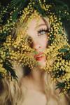 Mimosa Spring