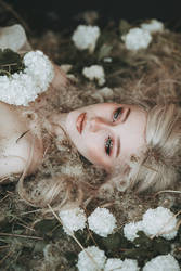 Dandelion and Flower