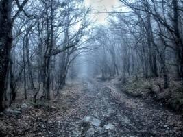 Misty path by Sugar-Sugar-Bee
