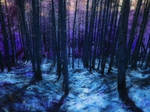 Stock|Forest|Misterious twilight