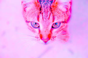 Kitty by Sugar-Sugar-Bee