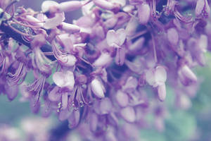 Purple spring|Exclusive BG texture|Stock by Sugar-Sugar-Bee