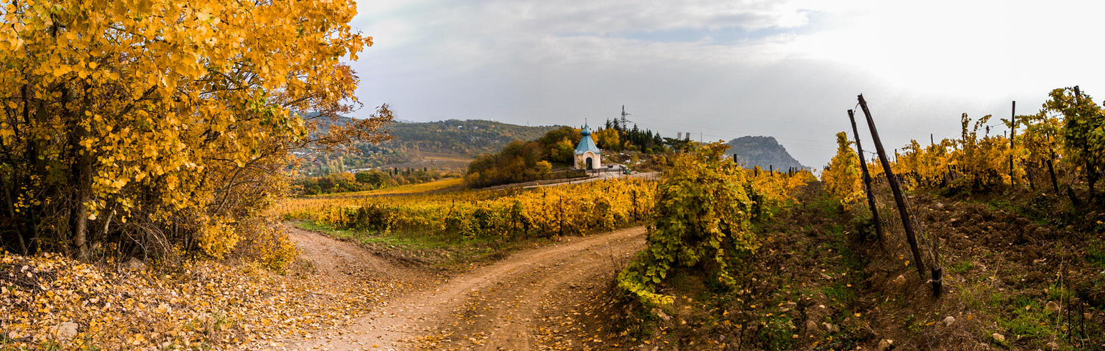 Autumn Vineyard Panorama by Chari-ot
