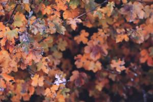 Autumn leaves by Sugar-Sugar-Bee