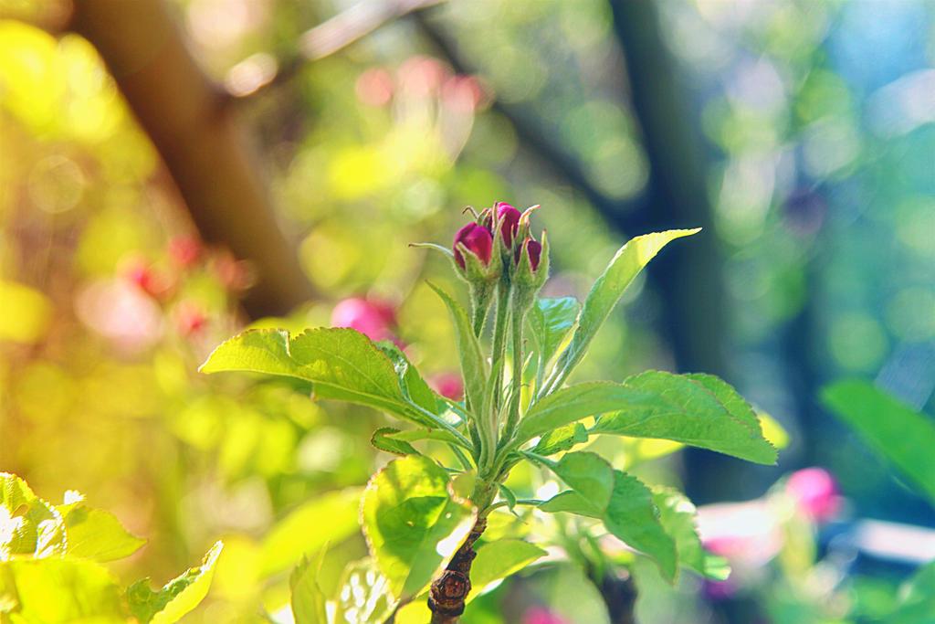 Spring blush by Sugar-Sugar-Bee