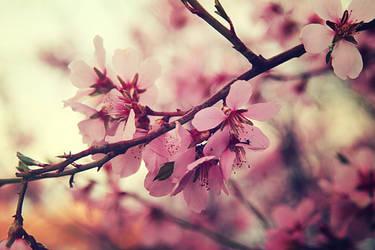 Spring tree blossom X by Sugar-Sugar-Bee