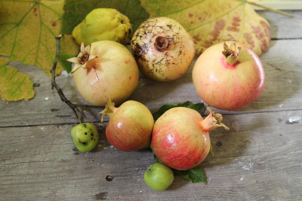 Autumn Fruits by Sugar-Sugar-Bee