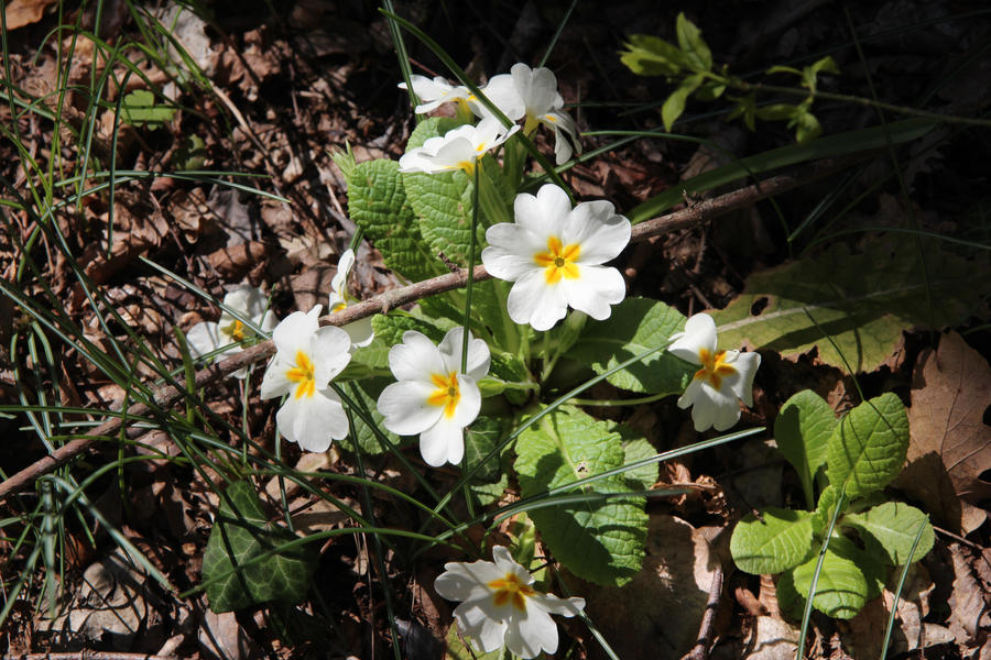 Little bit of spring by Sugar-Sugar-Bee