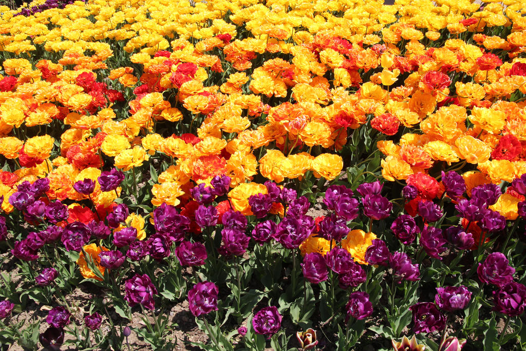 Flower boundary by Sugar-Sugar-Bee