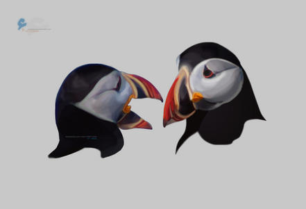 puffins by amoooon