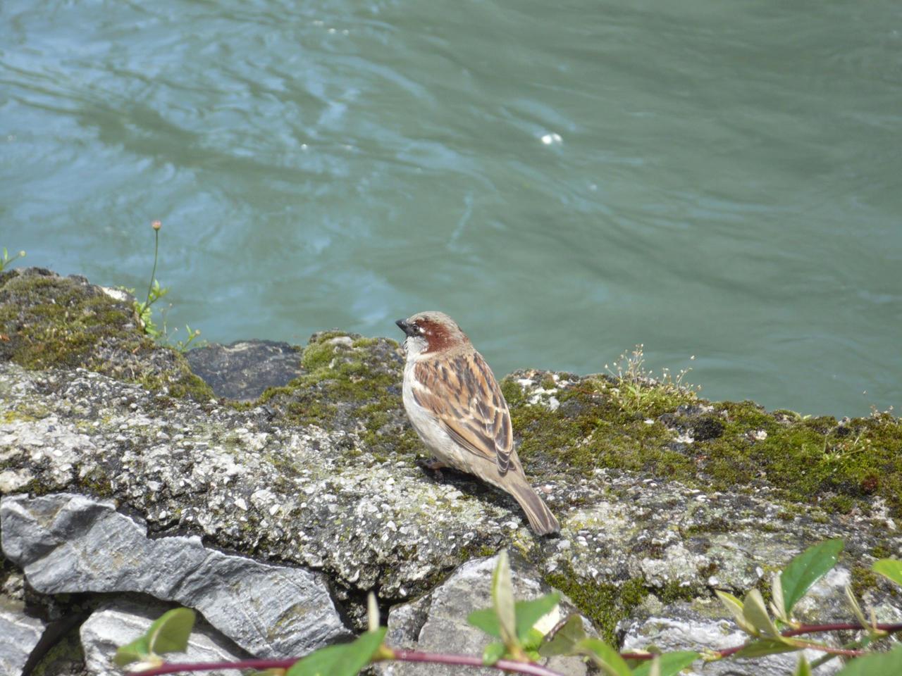 little bird 1 by nicolapin