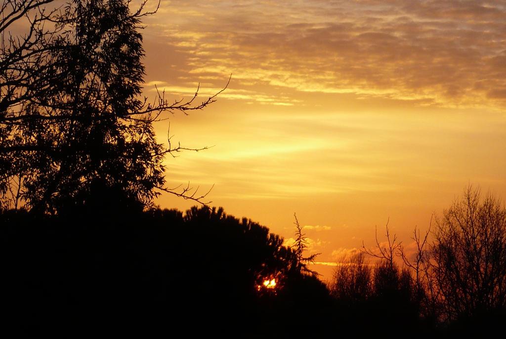 Winter Sunset by nicolapin