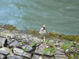 little bird 2 by nicolapin