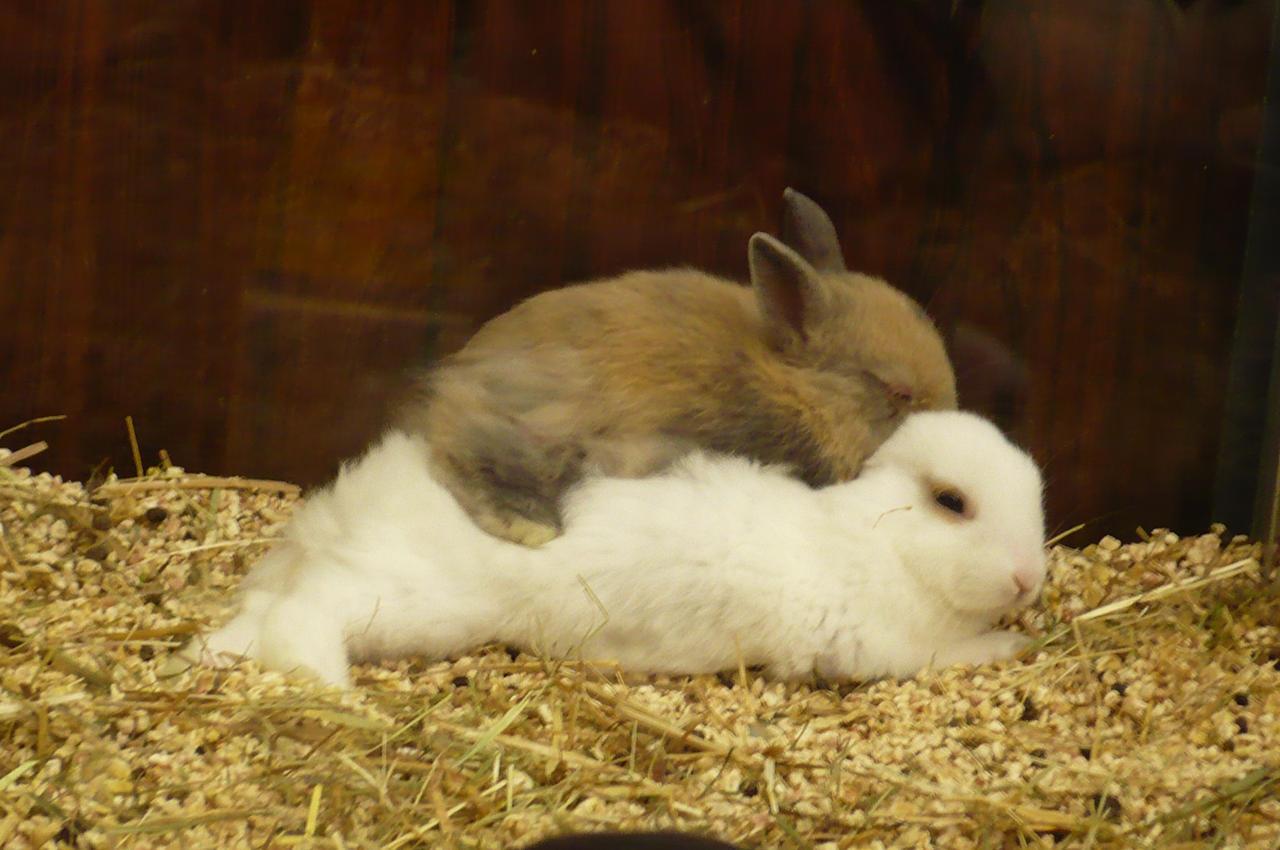 bunny hug 1 by nicolapin