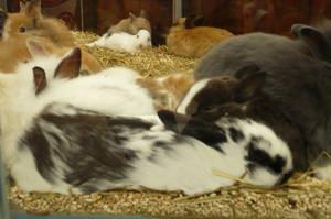 Big Bunnies Hug on the Glass by nicolapin