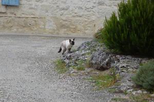 careful cat by nicolapin