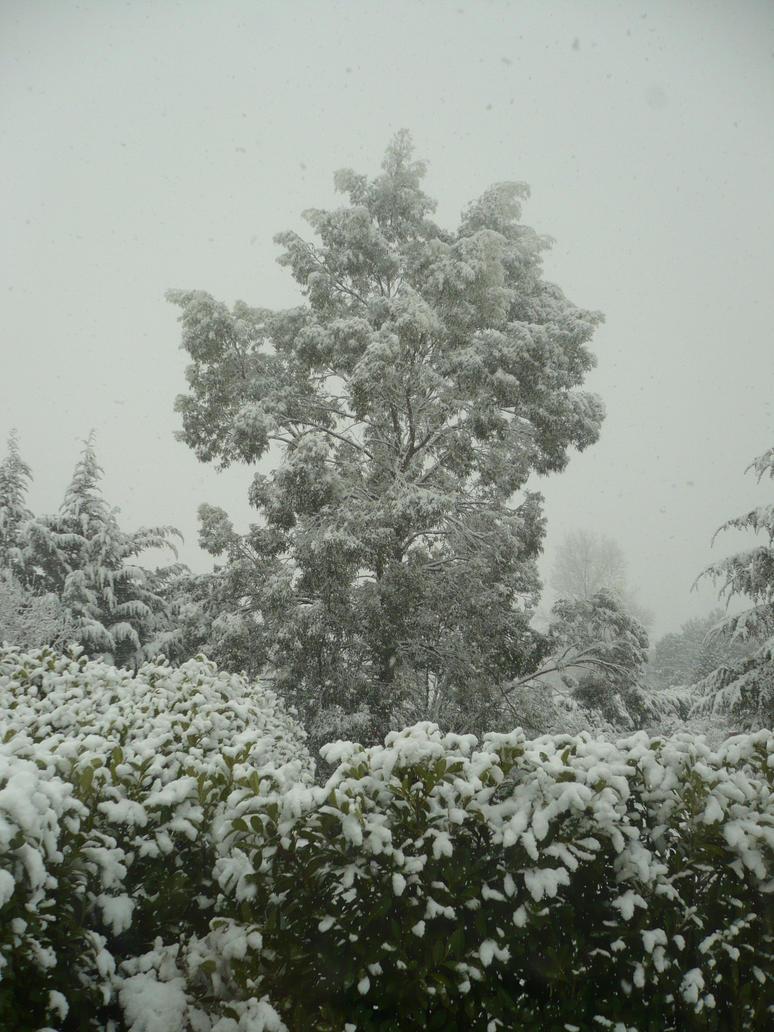 Winter Art - 2 by nicolapin